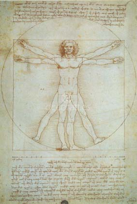Dibujo de Proporciones. 1490