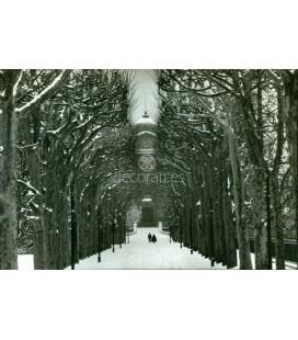 Jardin des Plantes, Philippe Gatrand, Paris, 1987