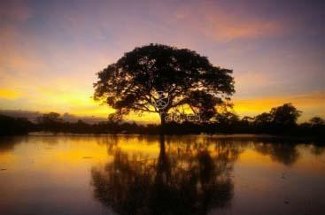 Atardecer en la Amazonía Boliviana