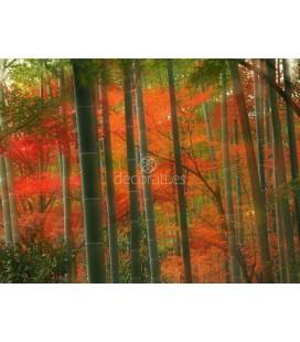 Bamboo Forest, Arashiyama Park, Kyoto, Japan
